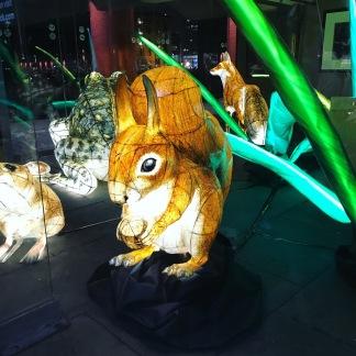 Animal Lanterns Albert Dock